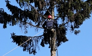 Обрізка та видалення аварійних дерев